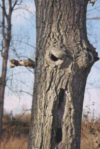 Baum Pareidolie