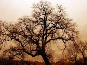 Baum gruslig