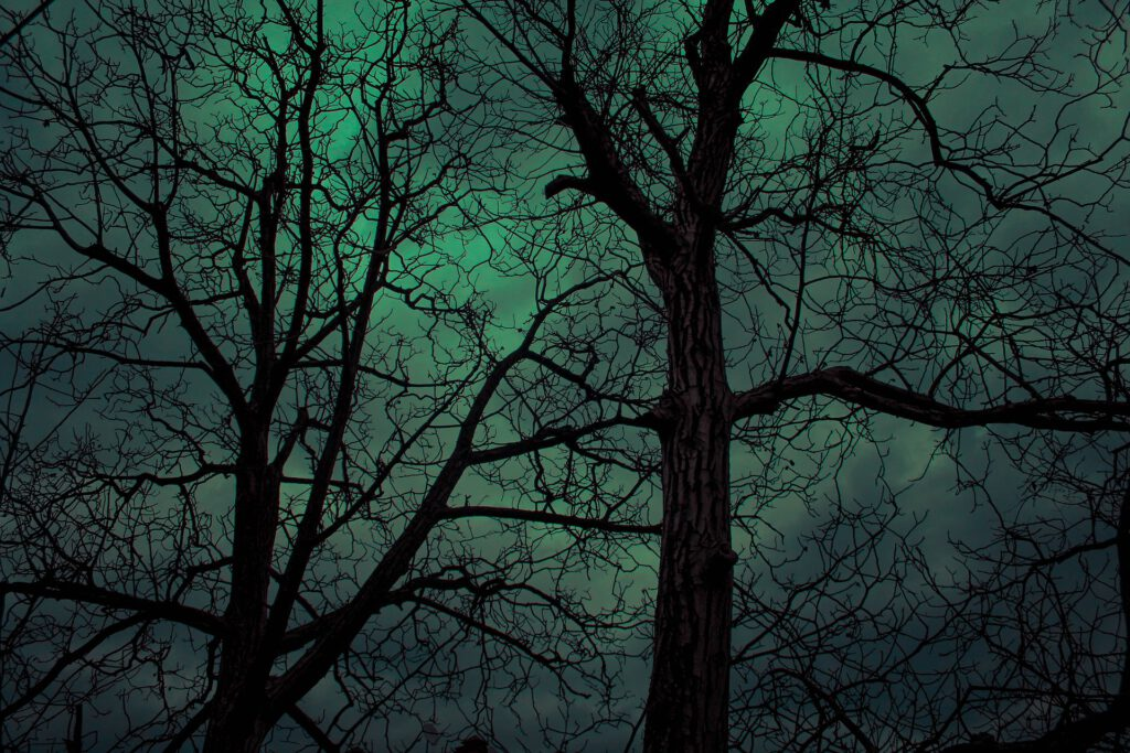 Bäume gruslig